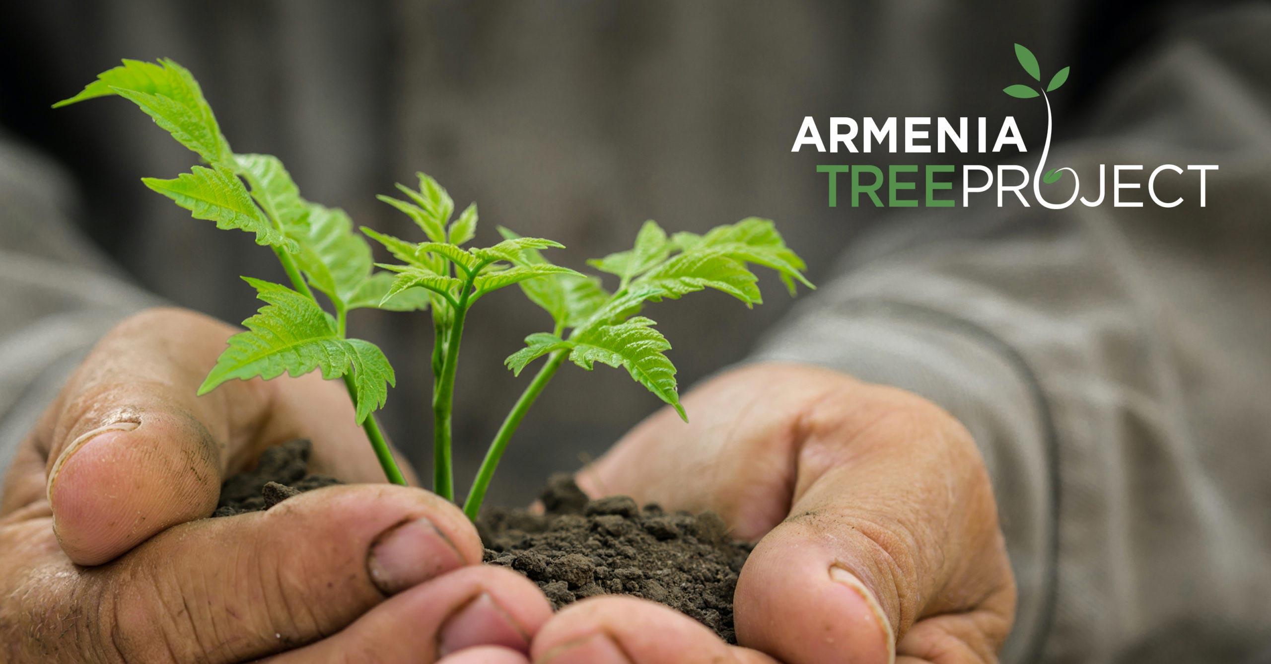 Armenian Tree Project